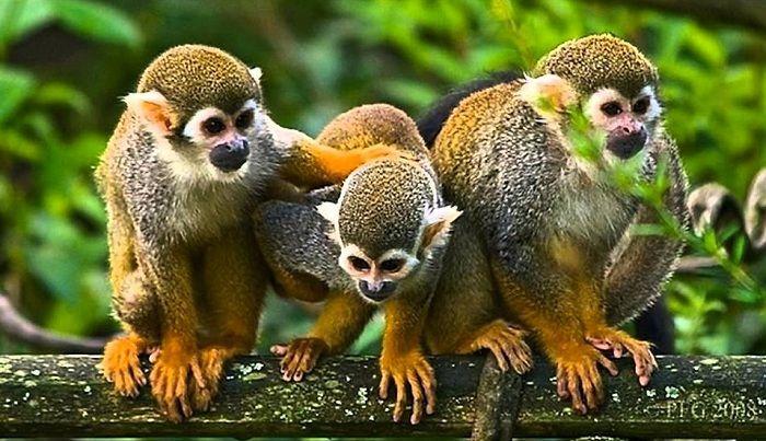 Algunas especies poco conocidas por el ser humano habitan la selva amazónica