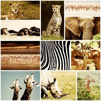 Animales Salvajes de África