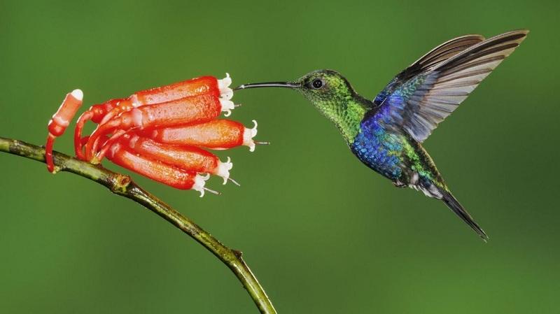 Animales de la Costa Ecuatoriana y sus Características