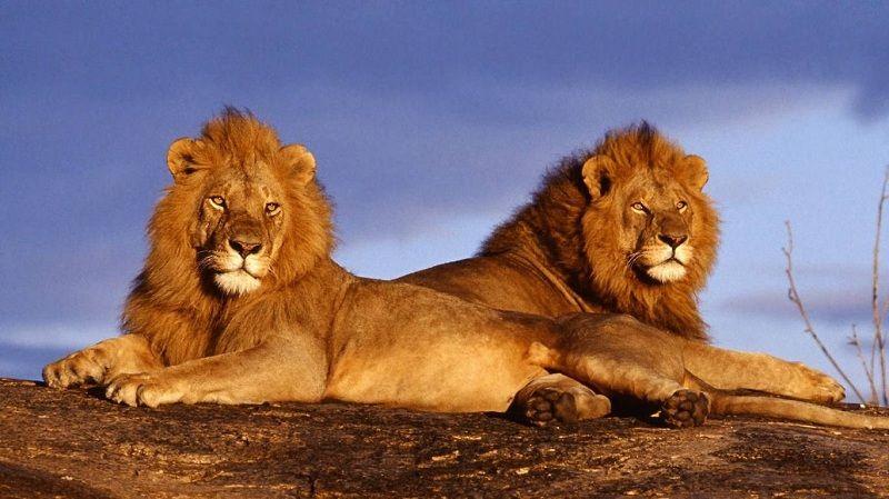 Animales de la Selva, Vida y Características