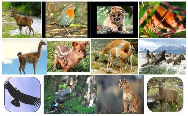 Animales del Bosque Andino Patagócio