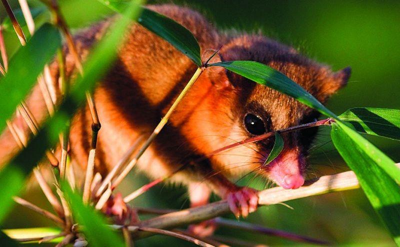 Animales del Bosque Andino Patagónico: Fauna y Características