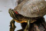 Animales del Bosque Seco: Cuáles son, Hábitat, Características y Especies