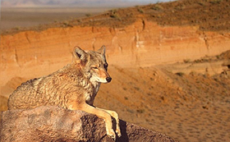 Animales del Desierto de Chihuahua: Cuáles son, Nombres y Características