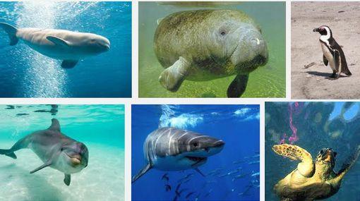 Animales del Mar en Peligro de Extinción
