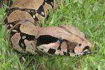 Animales en Extinción de la Selva