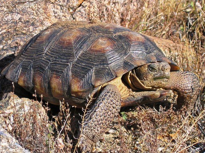 Animales que viven en el Desierto de Chihuahua.