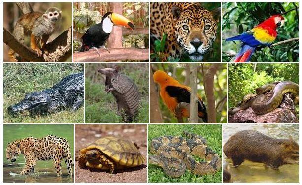 Especies que habitan la Selva Peruana