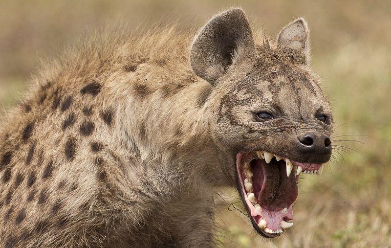 Los Animales Más Feroces de África