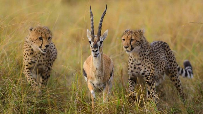 La ley del más fuerte predomina en el ambiente de la selva