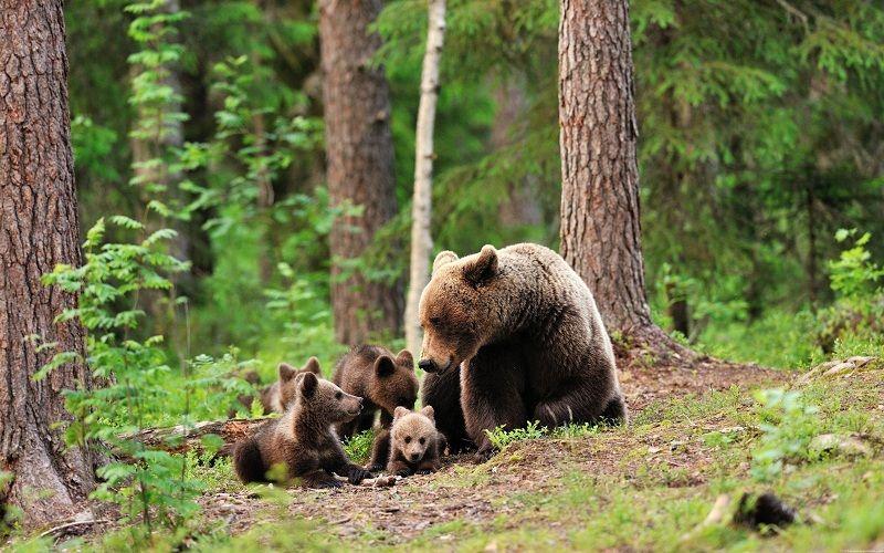 Animales del Bosque: Cuáles son, Características y Hábitat