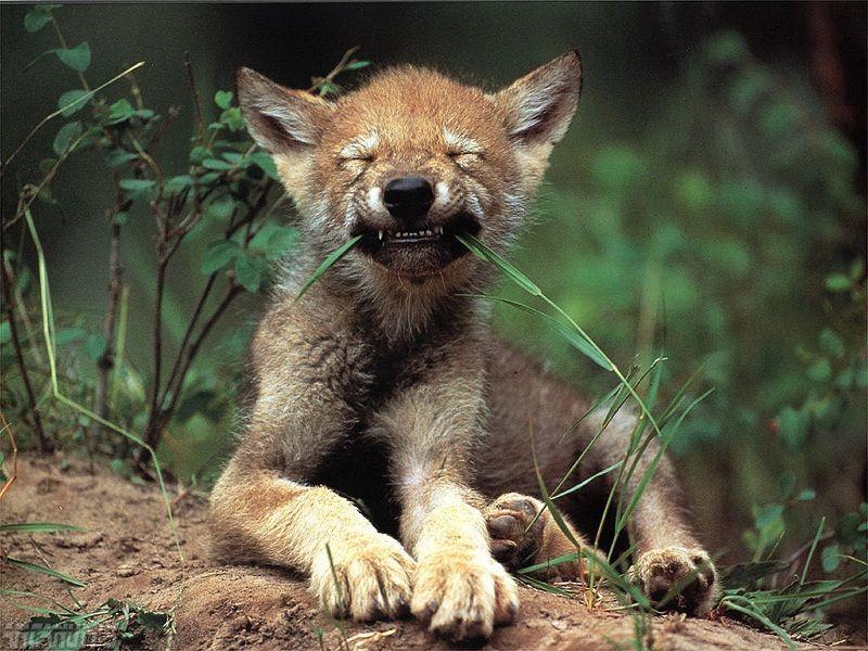 El bosque es uno de los hábitat con más recursos para los animales.