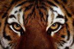 Animales de África: Hábitat y Características