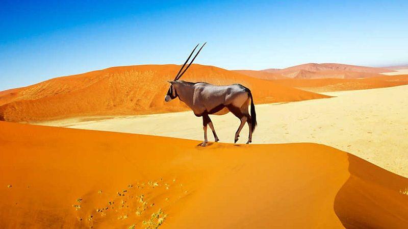 Cómo Sobreviven los Animales del Desierto