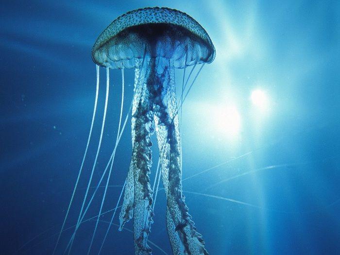 Algunos animales del mar son sumamente venenosos.