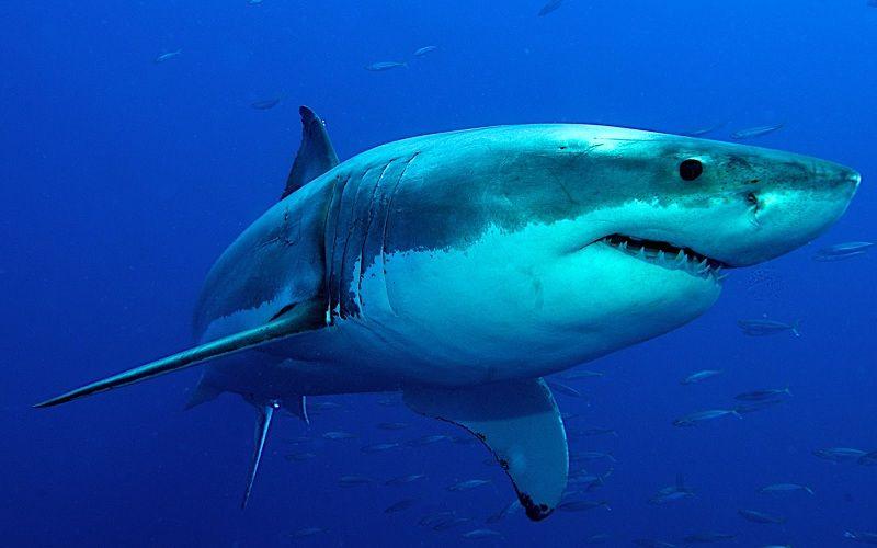 Los Animales Del Mar, Todo Lo Que Debes Saber