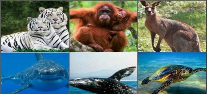 12 Animales en Peligro de Extinción ¡Especies en GRAVE RIESGO!