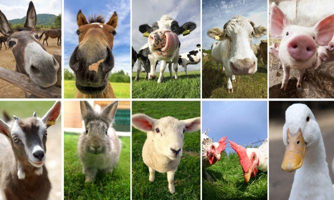 ¿Qué te parecen estas selfies de animales de la granja?