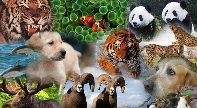 Animales Vertebrados: Características, Clasificación y Ejemplos
