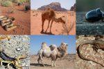 Animales del Desierto: Nombres, Fotos, Cuáles son y Qué Comen