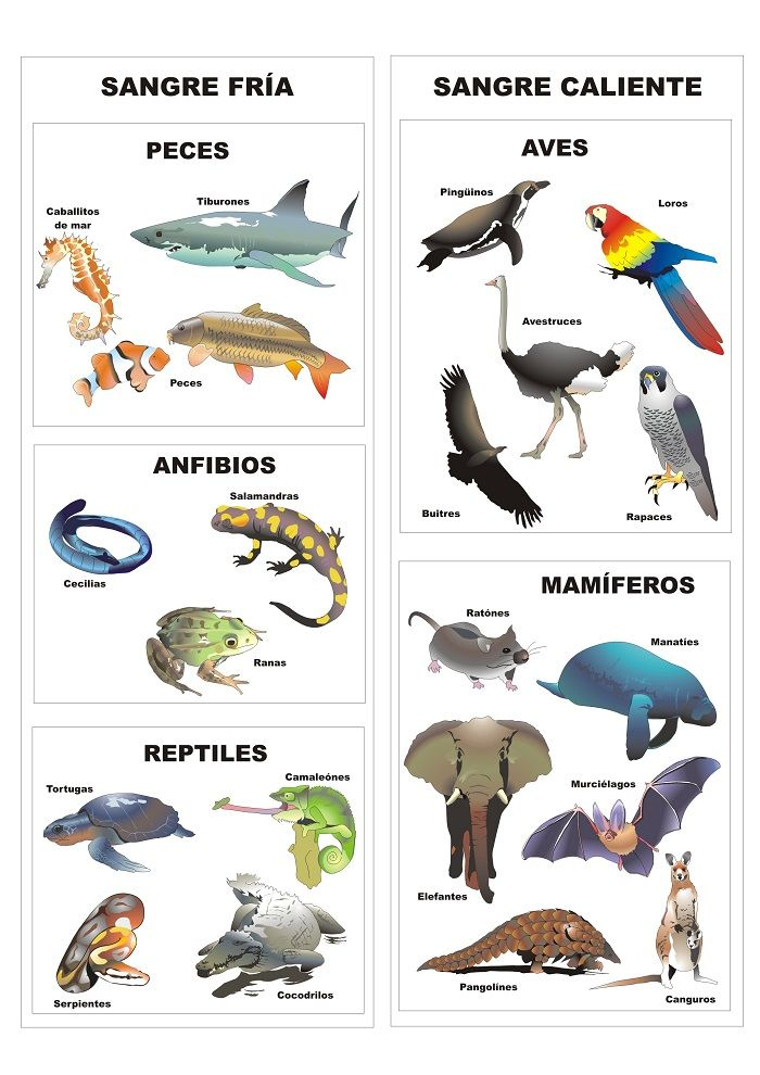 animales-vertebrados-por-tipo-de-sangre