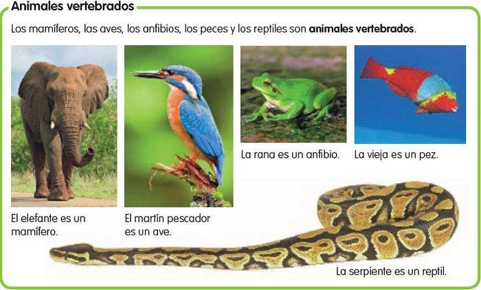 Los animales vertebrados tienen diferentes clasificaciones