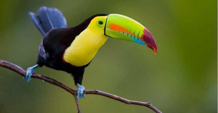 Animales de Costa Rica: Vida y Características