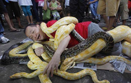 hombre-celebra-ano-de-la-serpiente-piton-birmana