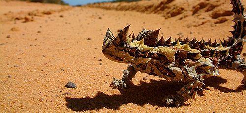 El desierto también tiene animales que muy rara vez han sido vistos por las personas.