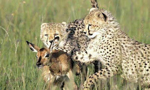 animales-carnivoros-ejemplos-caracteristicas-y-curiosidades