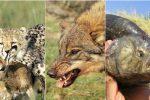 Animales Carnívoros: Ejemplos, Características y Curiosidades