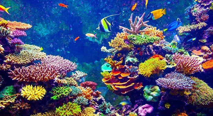 Coral: ¿Animal o Planta? Características, Tipos y Curiosidades
