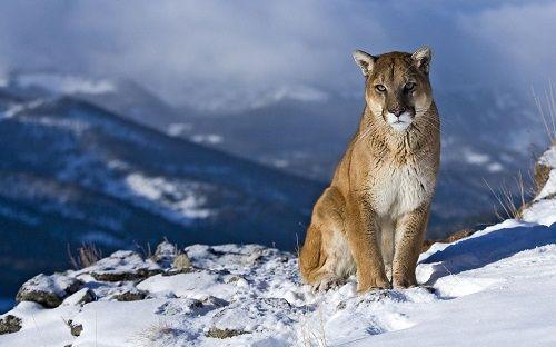leon-de-montana