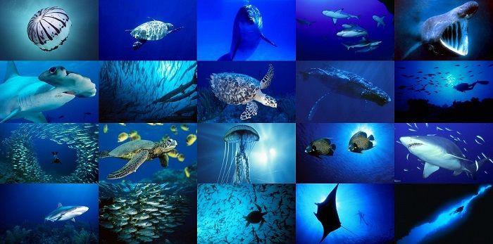 Animales Acuáticos: Nombres, Características y Qué Comen