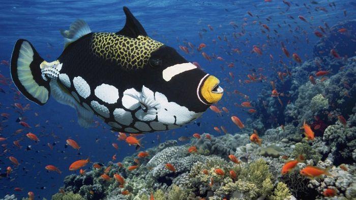 animales-marinos