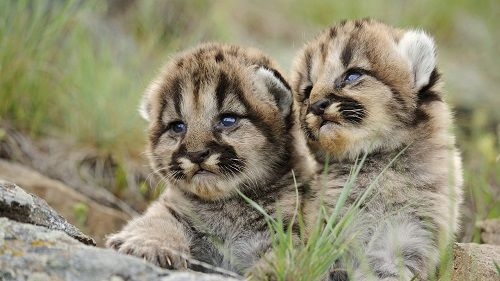 puma-bebe