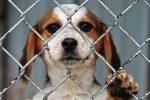 Maltrato Animal o Crueldad Animal: Definición, Tipos y Casos Reales