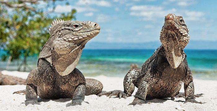 Animales de la Costa: Características, Clasificación y Curiosidades