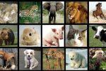 Animales Vivíparos: Cuáles Son, Especies, Ejemplos y Lista de Nombres