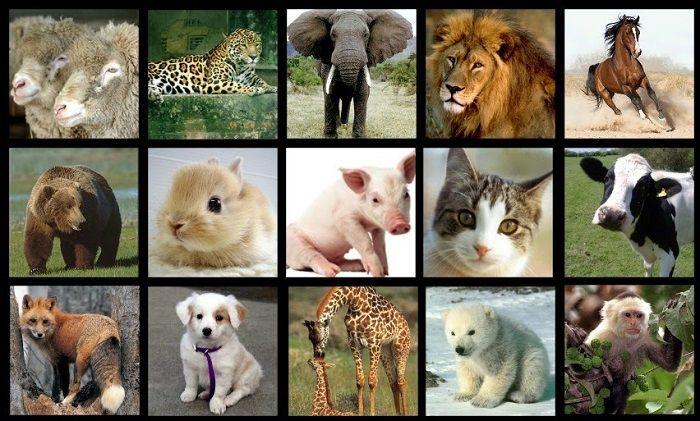 Animales Vivíparos Cuáles Son Especies Ejemplos Y Lista De Nombres