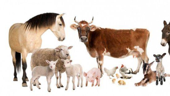 animales-de-la-granja-domésticos
