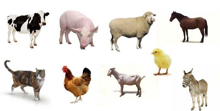 Animales Domésticos: Lista, Características, Tipos y Ejemplos