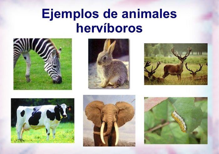 lista de animales hervíboros