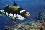 Animales Raros: Los Menos Conocidos del Mundo