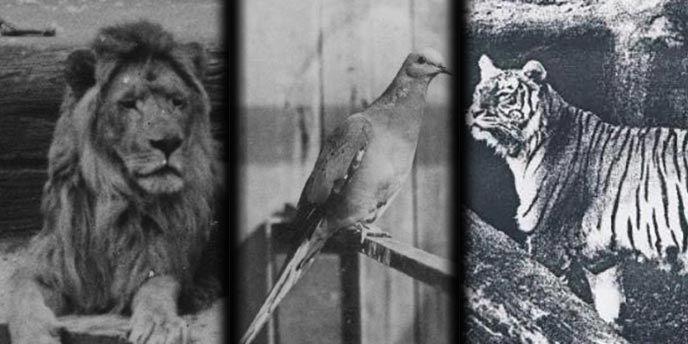 Animales Extintos: Información, Historia, Causas y Por Qué Se Extinguieron