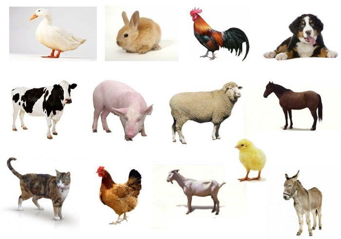 Animales Domésticos: Lista, Características, Tipos y Ejemplos ...