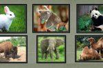 Animales Herbívoros: Información, Lista, Ejemplos y Nombres