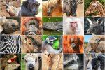 Reino Animal o Animalia: Características y Clasificación de los Animales