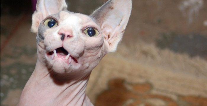 10 Animales Raros Del Mundo Que No Creerás Que Existen