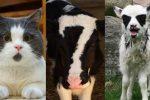 Los Animales Más Tiernos del Mundo ¡Imágenes Inéditas!